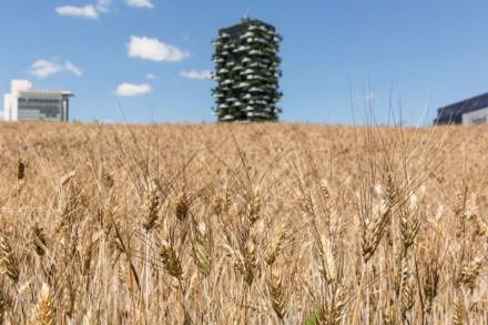 fondazione-nicola-trussardi-wheatfield-agnes-denes-milano-designboom-aaa